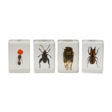 3D Bug Specimen Kit Nr.3