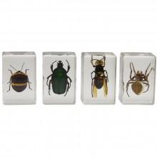 3D Bug Specimen Kit Nr.2