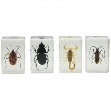 3D Bug Specimen Kit Nr.1